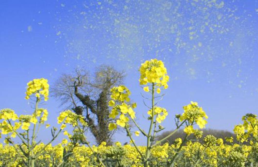 Changement climatique : de plus en plus de pollens, et d'allergies