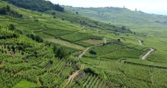 Agriculture en montagne